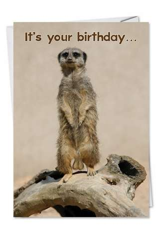 Go Nuts: Hilarious Birthday Paper Greeting Card