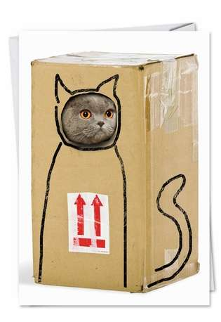 Humorous Birthday Paper Card from NobleWorksCards.com - Box Cat