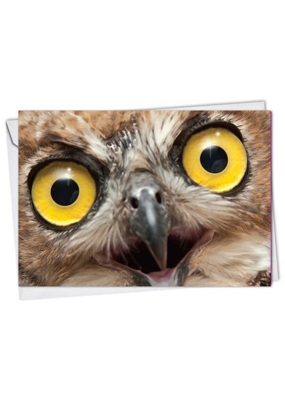 Stylish Blank Greeting Card from NobleWorksCards.com - What A Hoot