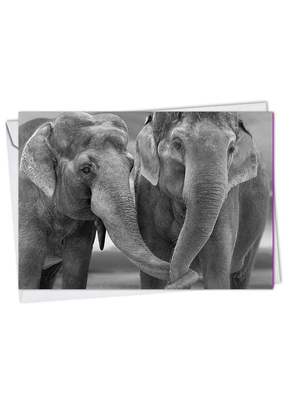 Stylish Blank Printed Card from NobleWorksCards.com - Trunks Of Love