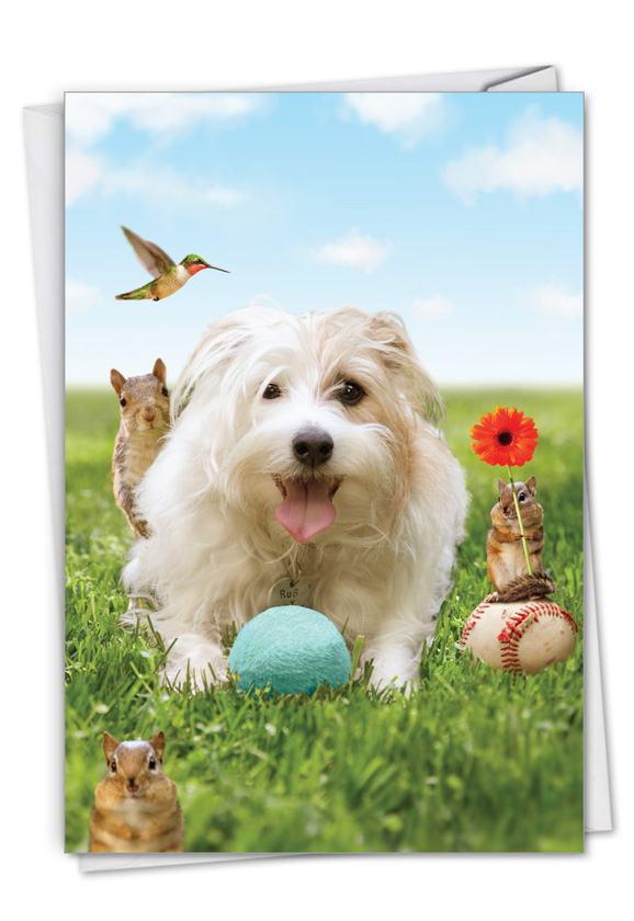 Dog Play: Hilarious Birthday Printed Greeting Card