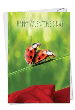 Funny Valentine's Day Greeting Card from NobleWorksCards.com - Ladybug Love