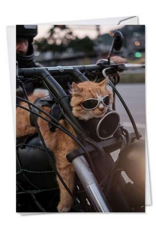 Cat Biker Birthday Funny Greeting Card