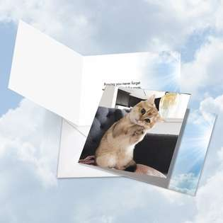 Hysterical All Occasions Square Printed Card from NobleWorksCards.com - Paws and Prayers Forget