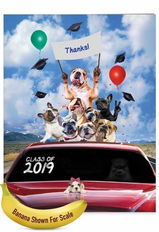 Stylish Graduation Thank You Jumbo Card From NobleWorksCards.com - Bulldog Mascot - 2019