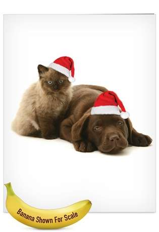 Stylish Christmas Jumbo Printed Greeting Card by Warren Photographic from NobleWorksCards.com - Copy Cats