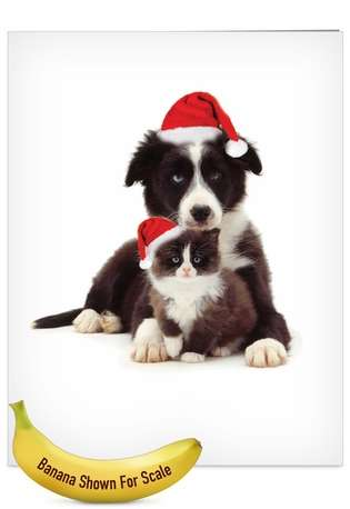 Stylish Christmas Jumbo Greeting Card by Warren Photographic from NobleWorksCards.com - Copy Cats