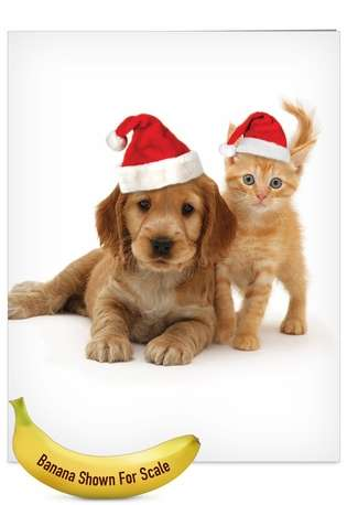 Creative Christmas Jumbo Printed Card by Warren Photographic from NobleWorksCards.com - Copy Cats