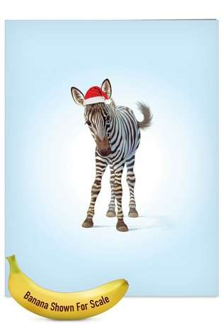 Stylish Christmas Jumbo Paper Card by John Butler from NobleWorksCards.com - Zoo Babies