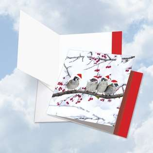 Stylish Christmas Jumbo Square Printed Greeting Card from NobleWorksCards.com - Christmas for the Birds