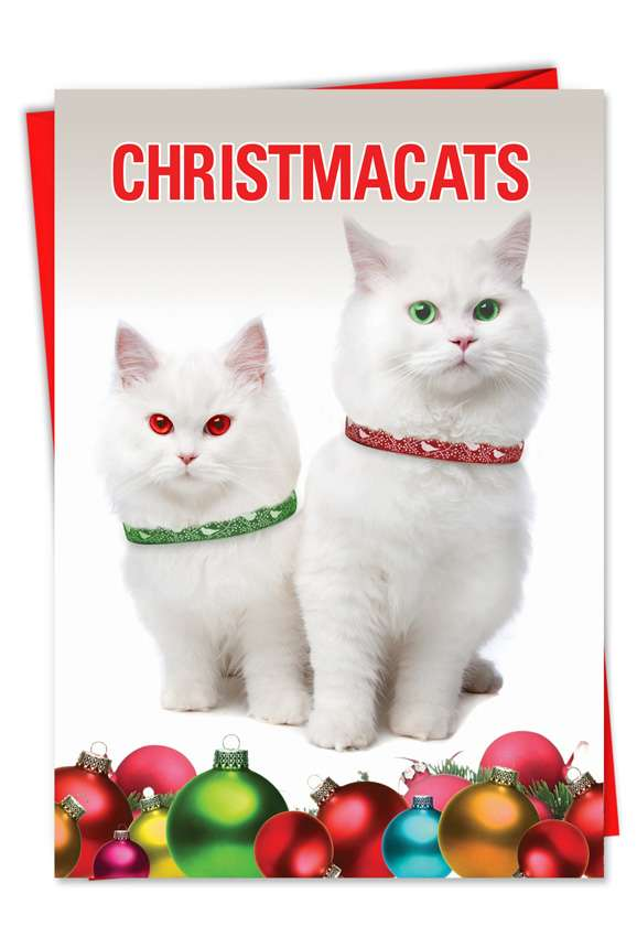 Christmacats Card