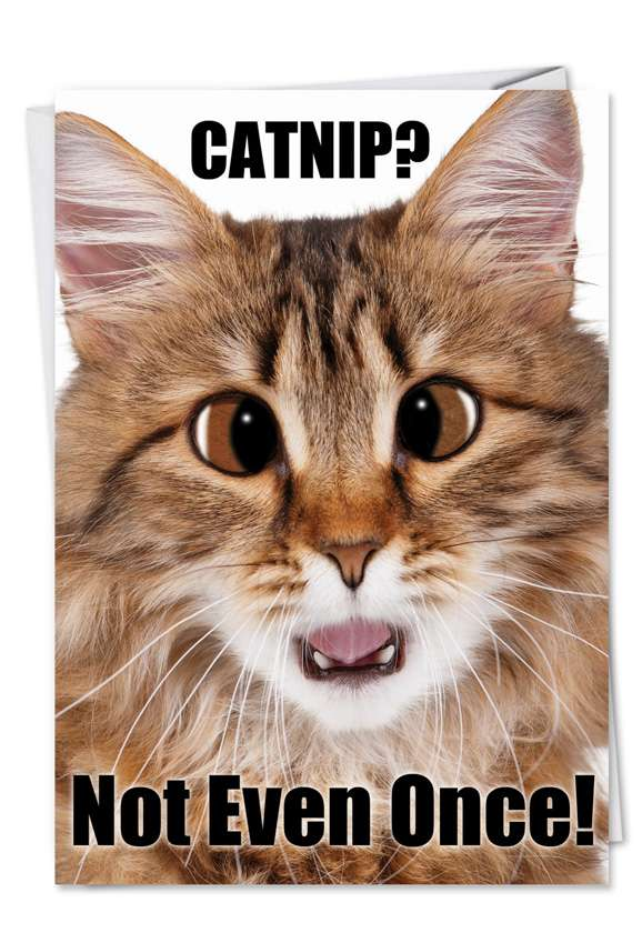Catnip Not Even Once: Funny Birthday Paper Card