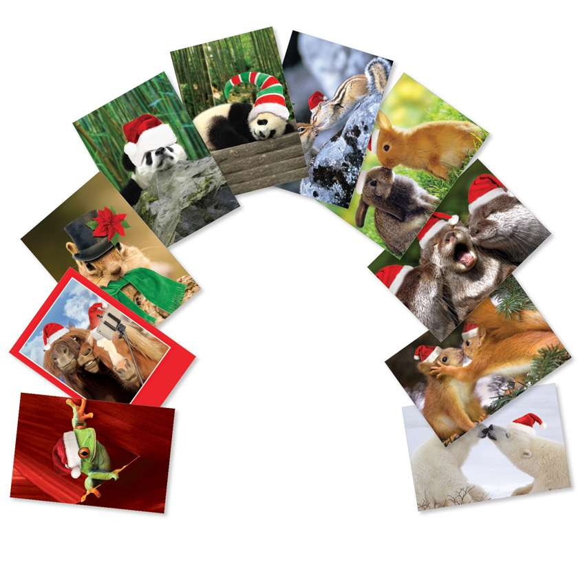 Christmas Creatures: Creative Christmas Assorted Set of 10 Cards