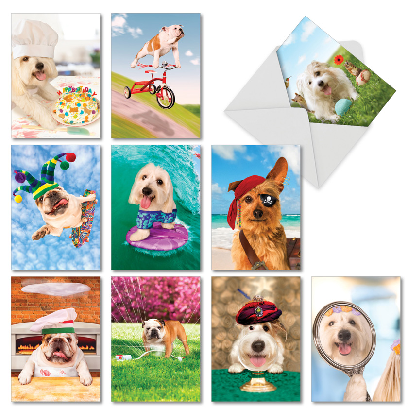 Shaggy Dogs: Hilarious All Occasions Blank Mixed Set of 10 Cards