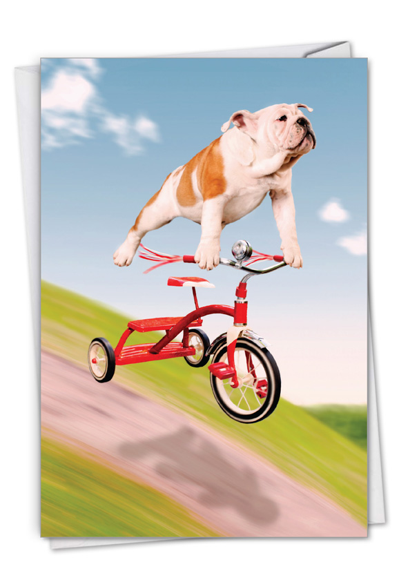 Dog On Trike: Funny Birthday Paper Greeting Card