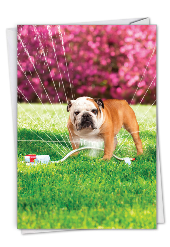 Dog In Sprinkler: Hilarious Birthday Printed Card
