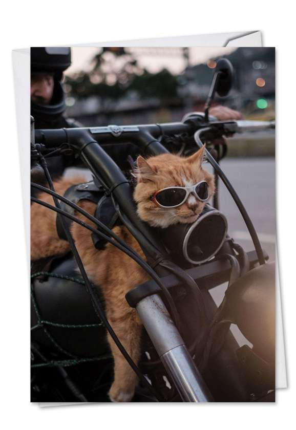 Cat Biker: Hilarious Birthday Greeting Card