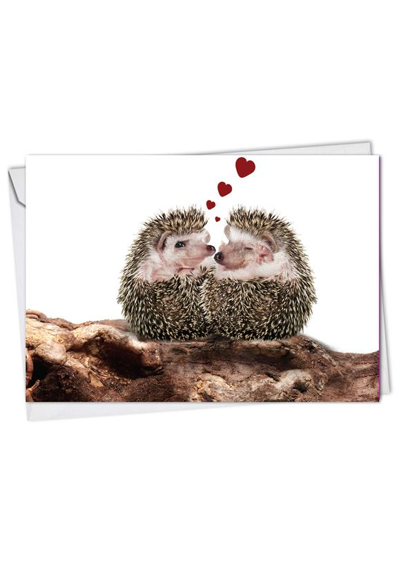 Cards From The Hedge: Creative Valentine's Day Greeting Card