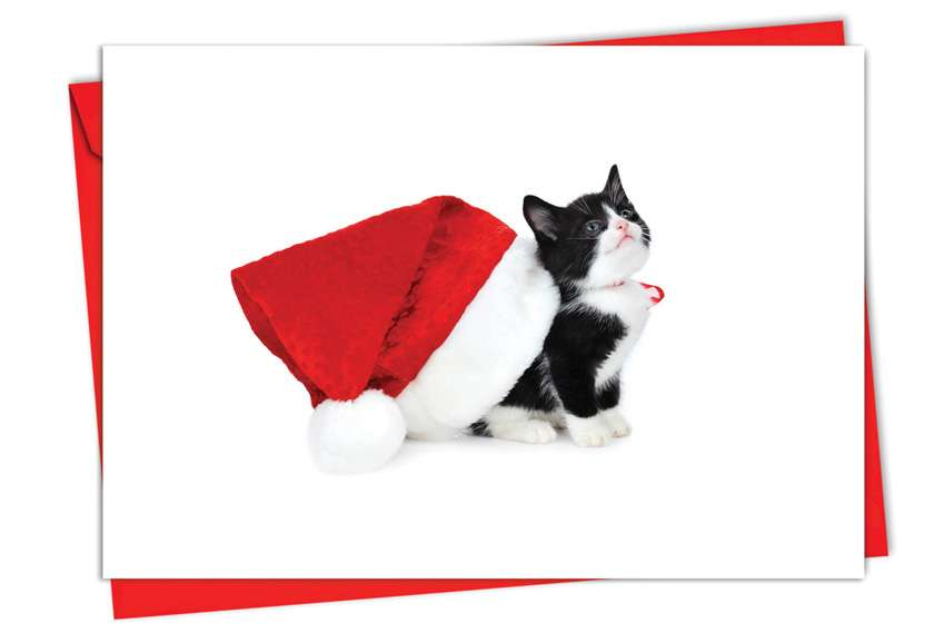 Santa Cats: Stylish Christmas Greeting Card