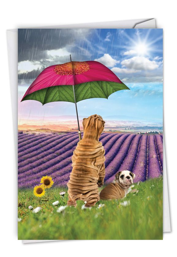 Raining Dogs - Sunny Days: Creative Get Well Printed Greeting Card