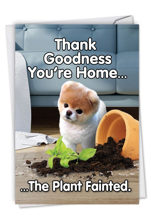 Boo's Plant Fainted: Funny Birthday Paper Greeting Card