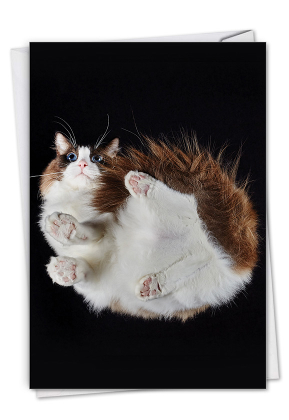 Under Cats: Stylish Birthday Paper Card