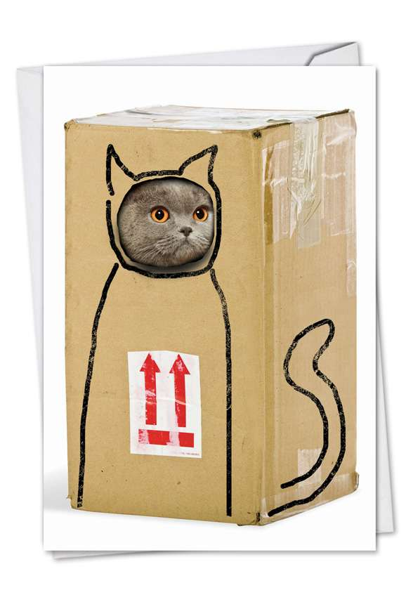 Box Cat: Hysterical Birthday Greeting Card