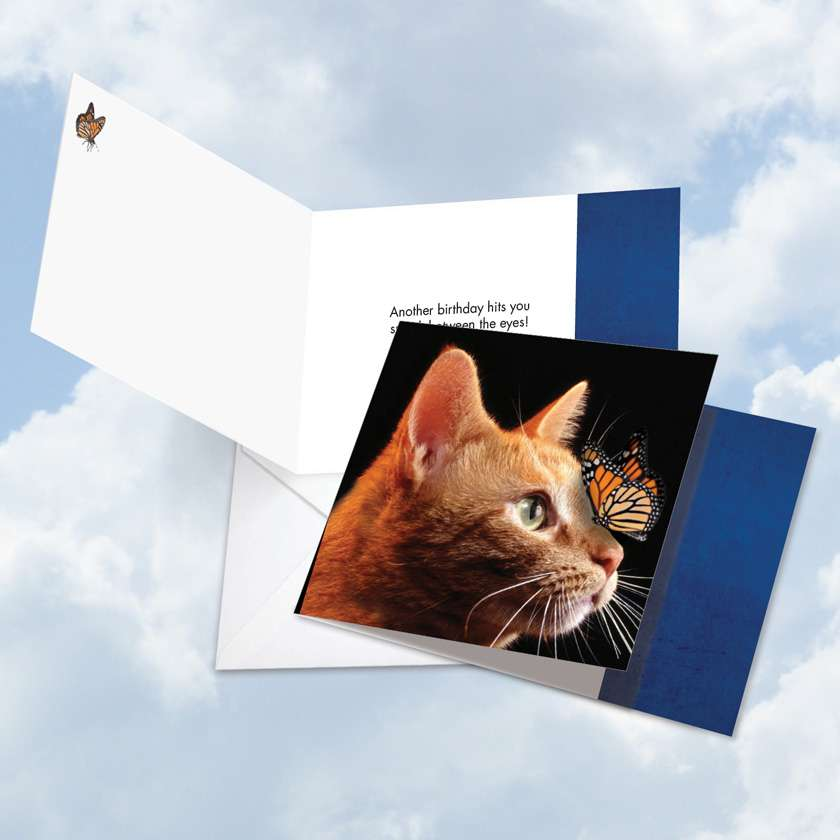 On The Nose Tabby Cat: Stylish Birthday Square-Top Printed Greeting Card