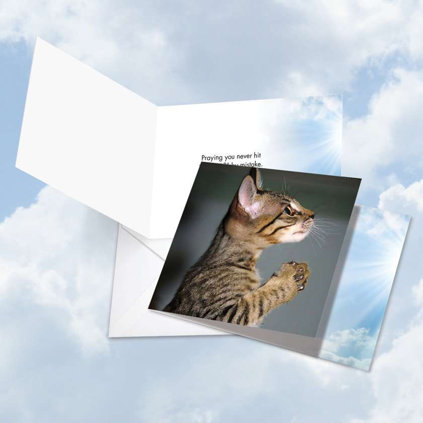 Paws and Prayers Reply All: Hilarious All Occasions Square-Top Paper Card