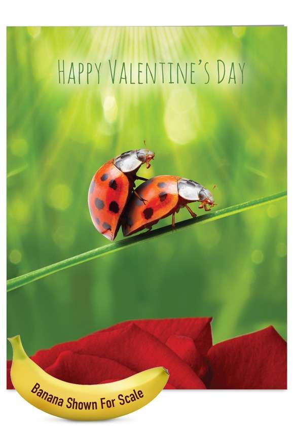 Hilarious Valentine's Day Jumbo Printed Card from NobleWorksCards.com - Ladybug Love