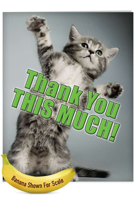 This Much Kitten: Humorous Thank You Jumbo Paper Card