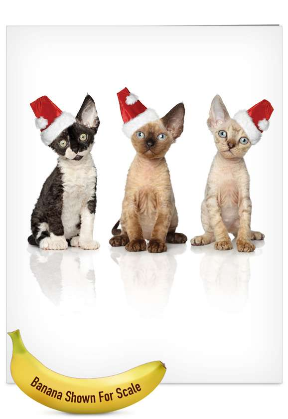 Santa Cats: Creative Christmas Jumbo Printed Greeting Card