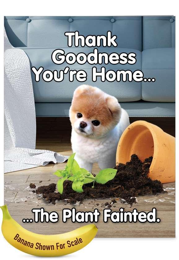 Boo's Plant Fainted: Humorous Birthday Big Card
