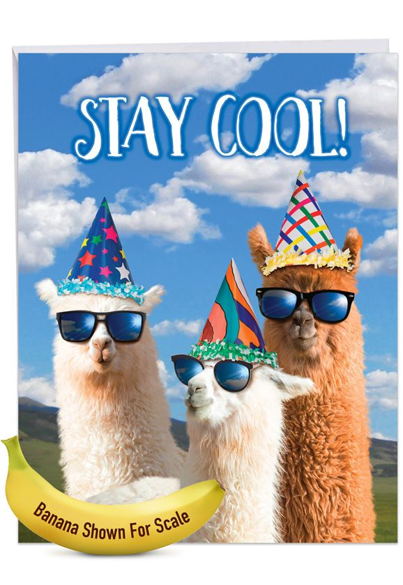 Cool Llamas: Humorous Birthday Over-sized Paper Greeting Card