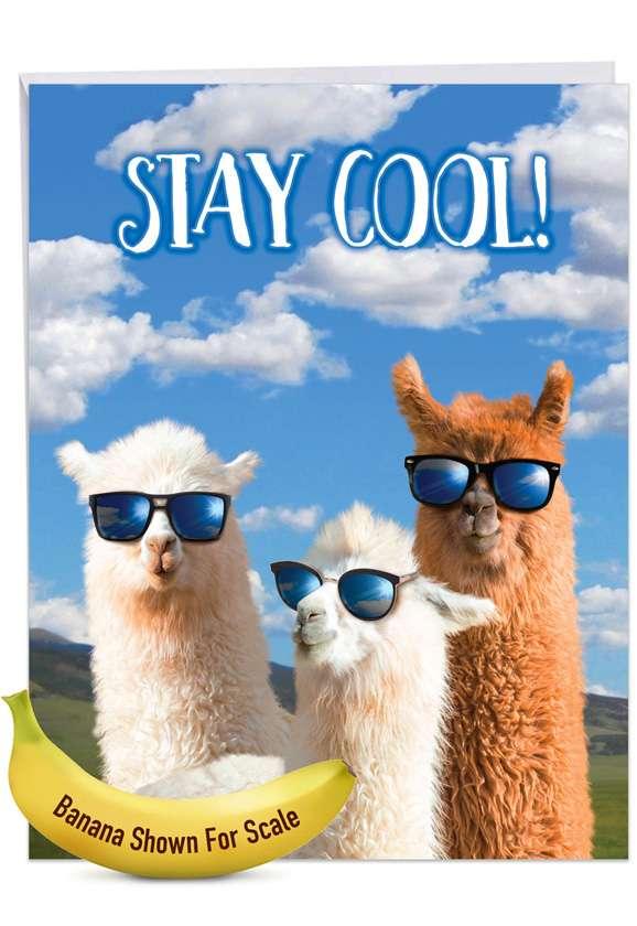 Cool Llamas: Hysterical Congratulations Jumbo Printed Greeting Card