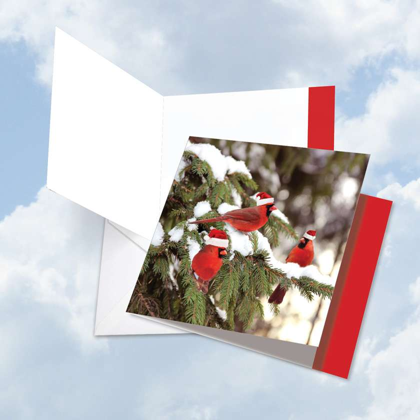 Christmas for the Birds: Creative Christmas Thank You Jumbo Square-Top Paper Card